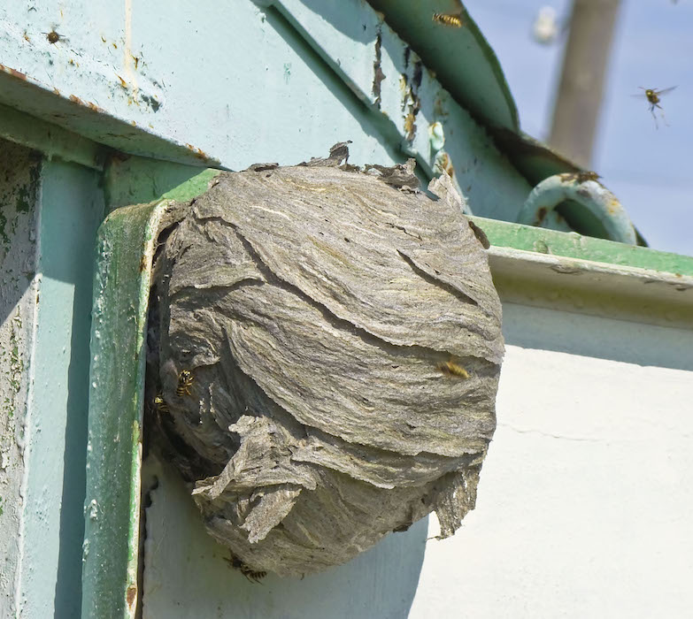 Hornet's Nest On House